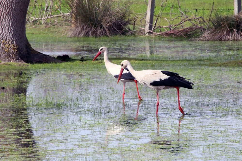 Kızılırmak Delta Wetland and Bird Sanctuary springs to life