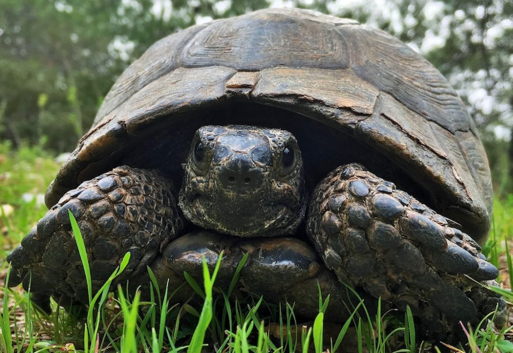 Dog Walk Discoveries - The Time of Tortoises