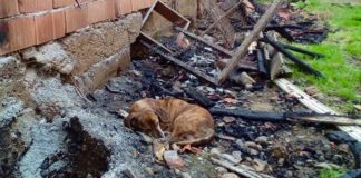 Fire in Köyceğiz leaves owner, and 85 dogs under her care, homeless