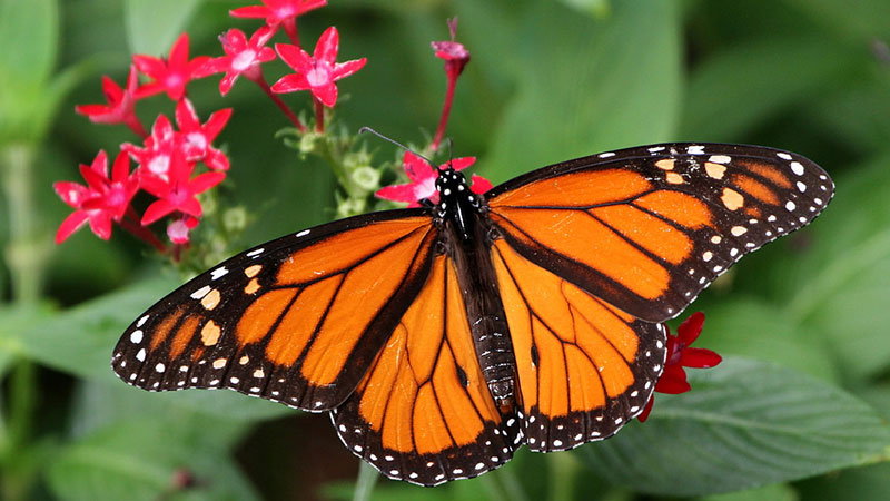 National learn about butterflies day