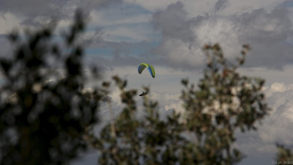 A glimpse of a paraglider through the trees