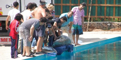 May 2010 - Brought the two dolphins from Kaş in the back of a vegetable truck and tipped them in the pool