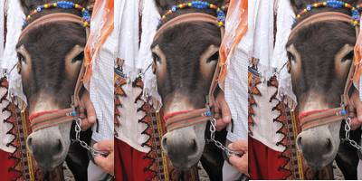 Fethiye's Nomad Museum owner, Enver Yalçin hosts what he claims to be the world's first wedding between two donkeys.