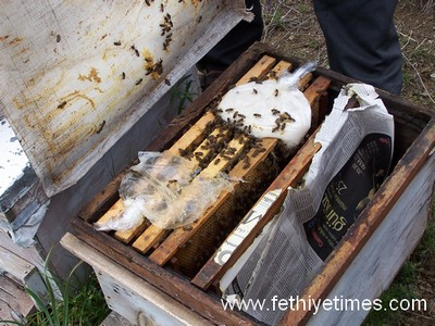 Turkish bee hive with 1:1 sugar water and patties