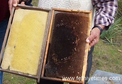 Turkish bee hive wax and honey
