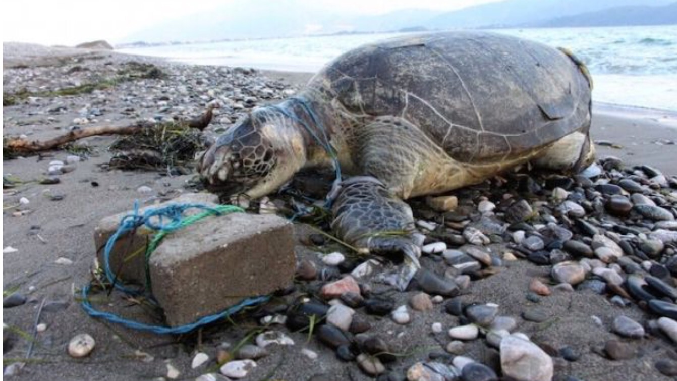 The mystery surrounding the dead turtle washed up on Calis Beach