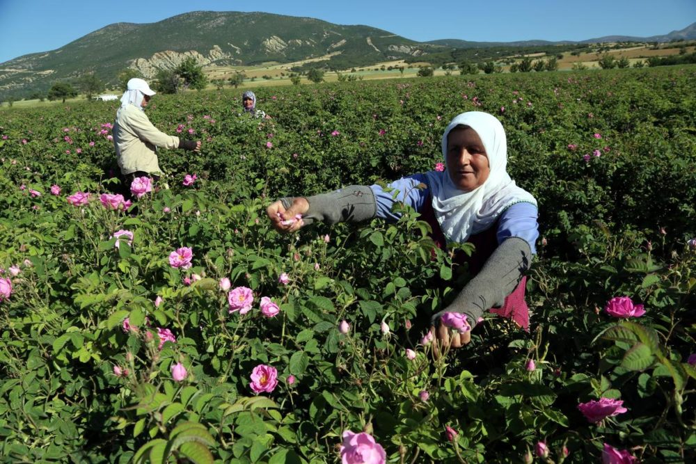 Isparta: Anatolia's most aromatic city