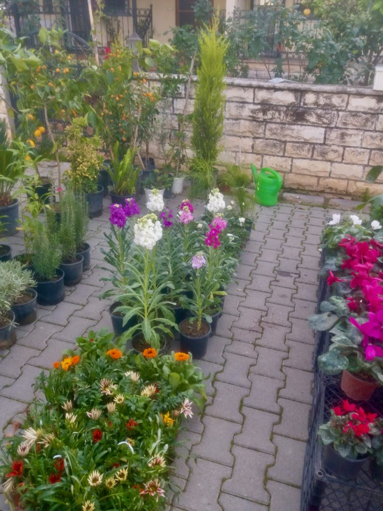 How does your garden grow? Lee's gardening advice for January 2021– New Year, New Hopes