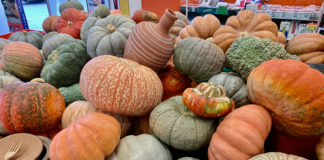 Pumpkins - from Jack-o-Lanterns to delicious desserts