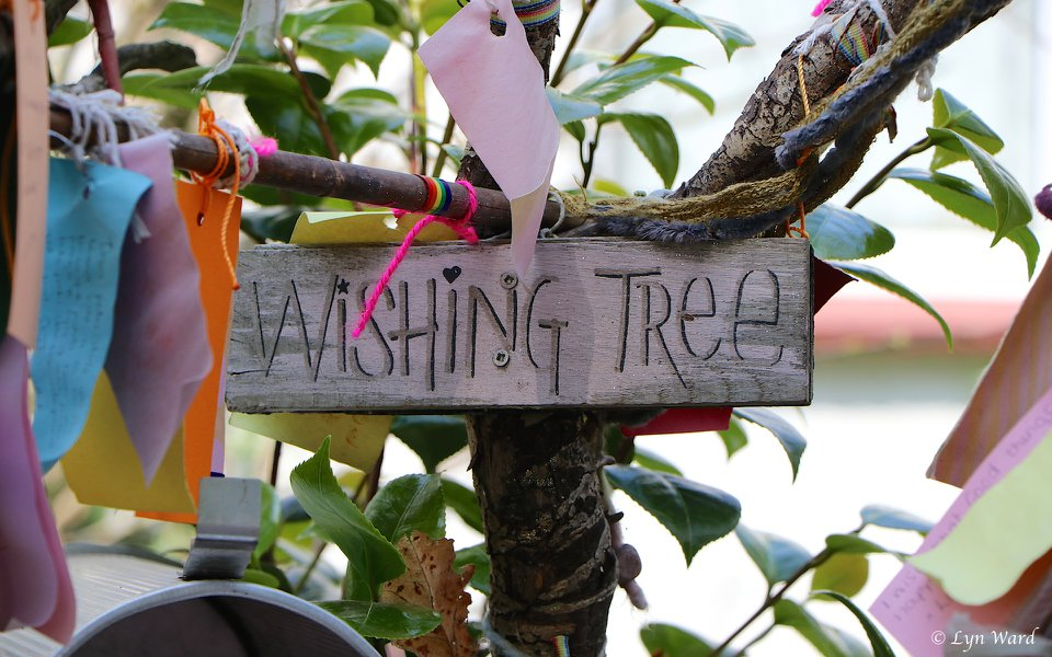 The fascinating culture of Wishing Trees