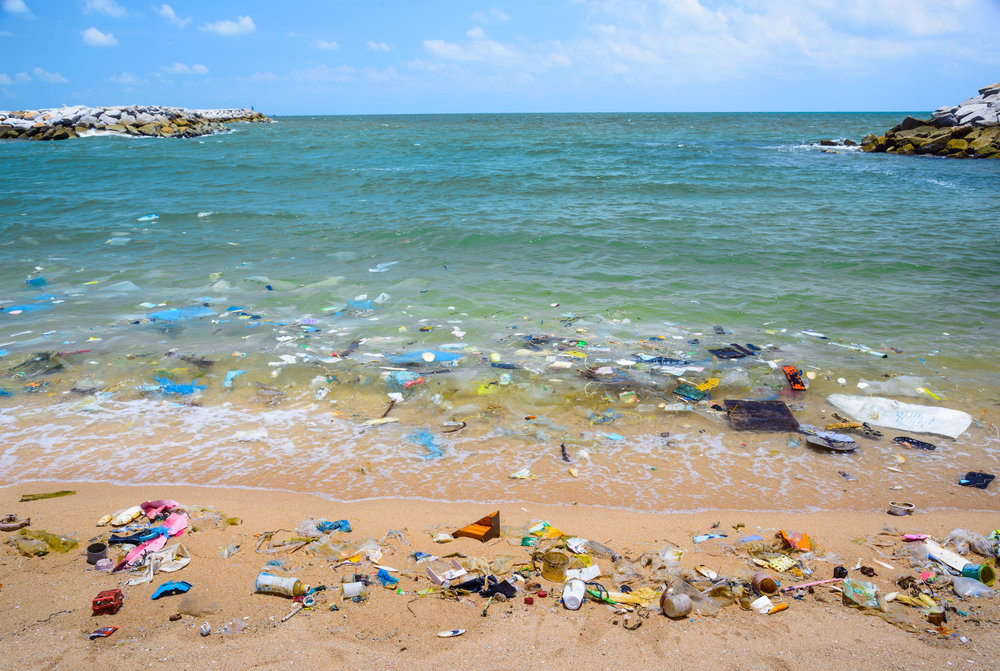 Sea Shore Savers - more than just a beach clean