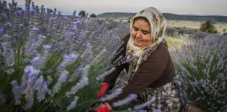 Kuyucak Village: The land of lavender in Turkey