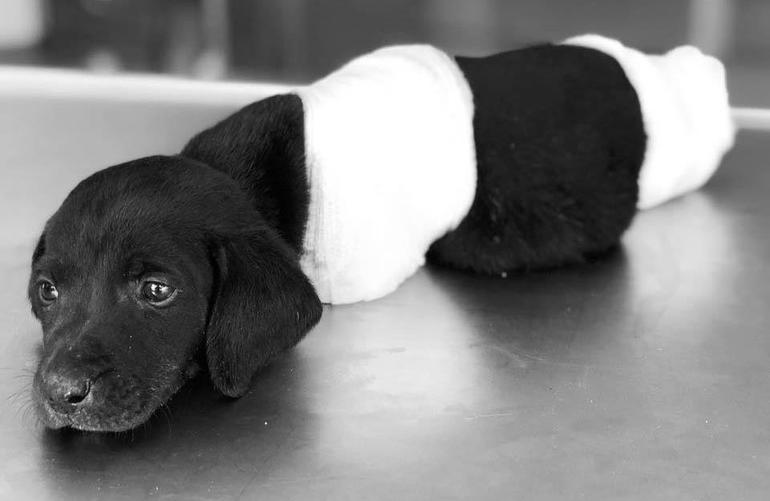 Killing of a puppy stirs outrage in Turkey