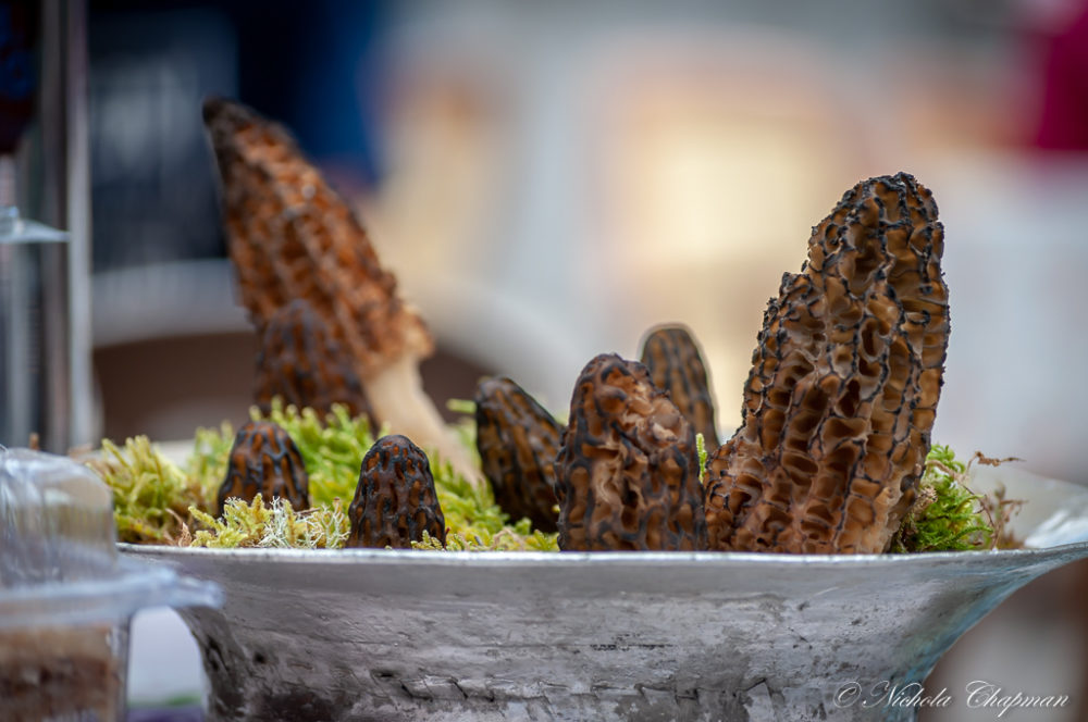 10th Yeşilüzümlü Mushroom Festival -celebrating the marvellous Morel