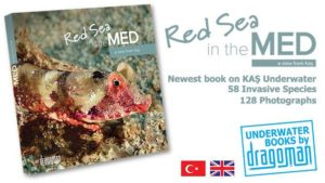 Red Sea in the Med: a view from Kaş - a talk by Murat Draman @ Old Town Hotel