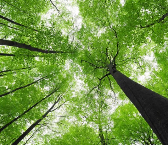 International Day of Forests - celebrating and protecting our trees