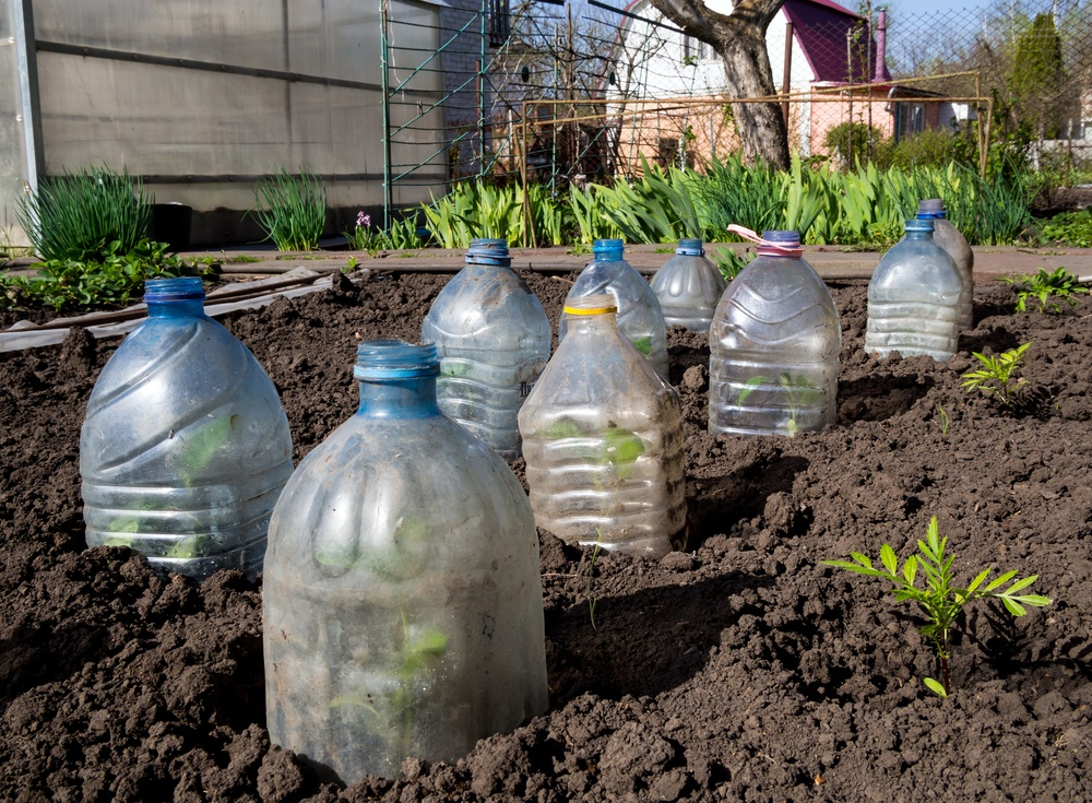 How does your garden grow? Lee's gardening advice for November– time to cool down