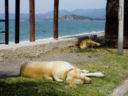 It's A Dog's Life...