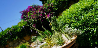 Fethiye Times Garden Competition 2020 - meet the winners