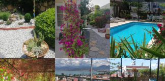 Fethiye Flower Show- gardening competition - and the winners are...