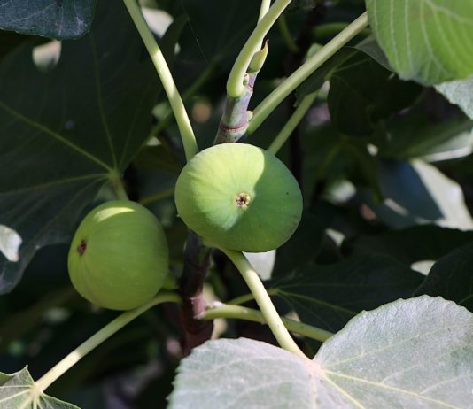 How does your garden grow? Lee's gardening advice – October is a time to harvest