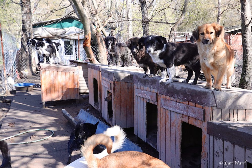 Köyceğiz Animal Shelter - too many dogs, too few humans