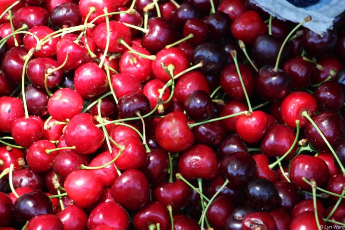 17th Nif Traditional Cherry Festival