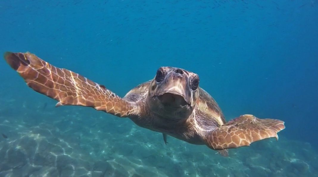 Turtle Alert - make a positive difference for sea turtles