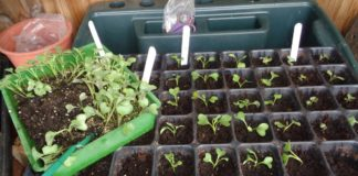 How does your garden grow? Lee's gardening advice – Marching ahead
