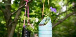 How does your garden grow? Lee's gardening advice for March 2021– Spring is in the air