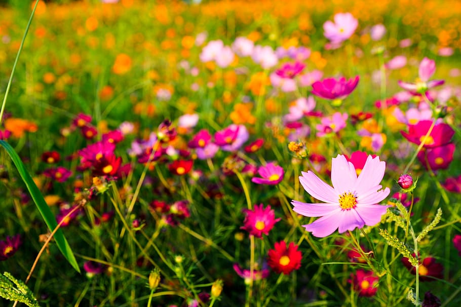 How does your garden grow? Lee's gardening advice – beautiful but deadly