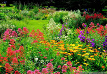 How does your garden grow? Lee's gardening advice - May the flowers be with you