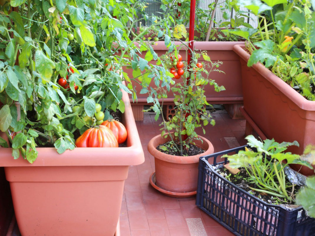 How does your garden grow? Lee's gardening advice for April 2021– Blooming April