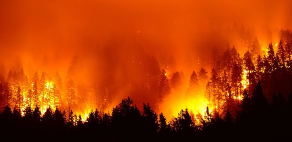 Climate change and wildfires - a vicious circle