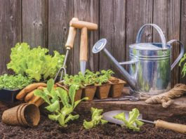 """How does your garden grow? Lee's gardening advice - """"May"""" you enjoy gardening"""