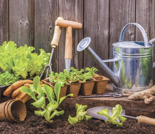 "How does your garden grow? Lee's gardening advice - ""May"" you enjoy gardening"
