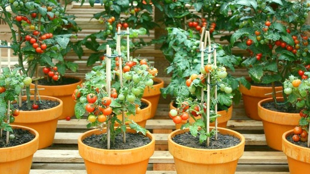 How does your garden grow? Lee's gardening advice - it's getting hotter and hotter