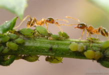 How does your garden grow? Lee's gardening advice – a bugs life