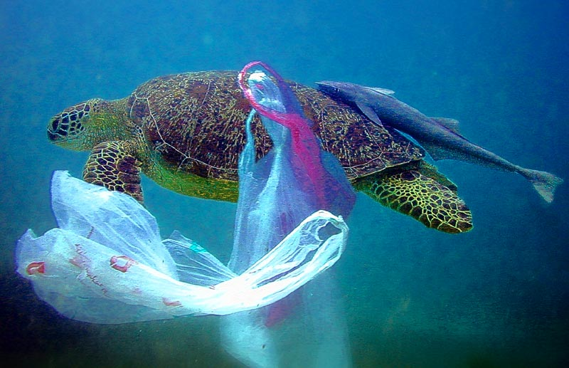 Turtle swimming amongst plastic bags