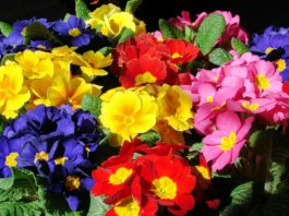How does your garden grow? Lee's gardening advice - Sprung into action