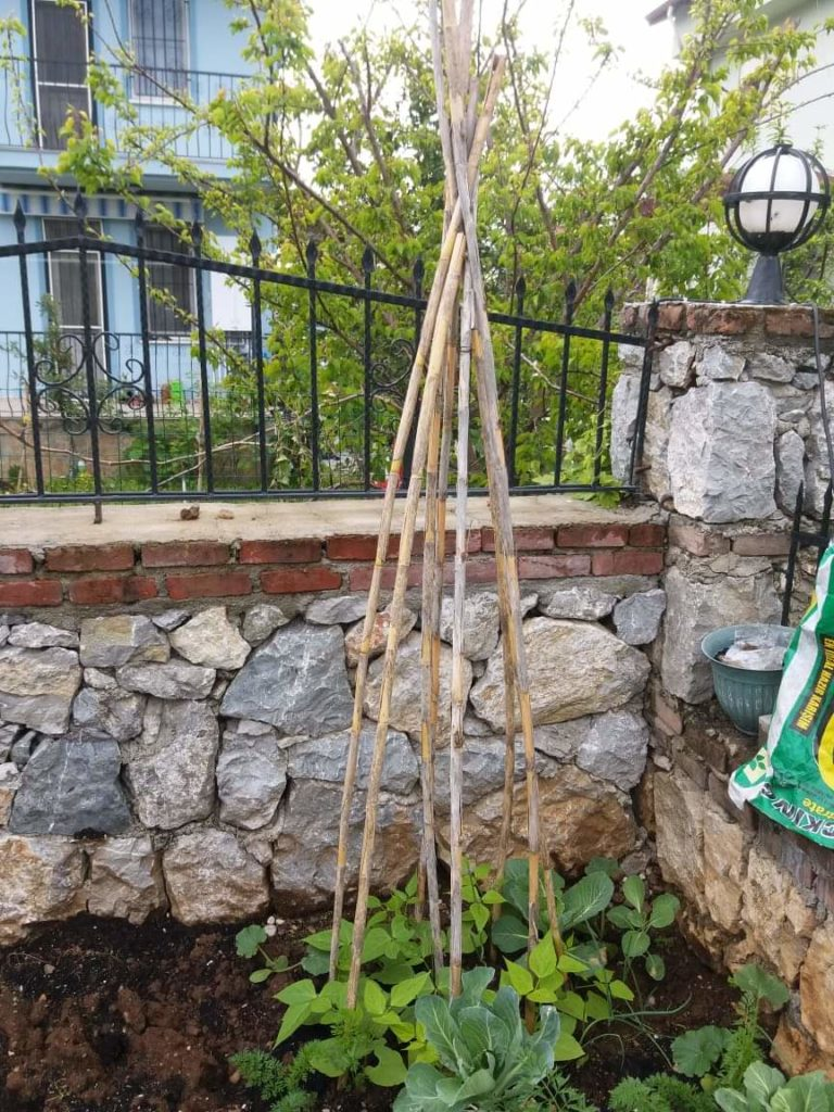How does your garden grow? Lee's gardening advice - getting started