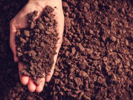 How does your garden grow? Lee's gardening advice for December - soil of the century